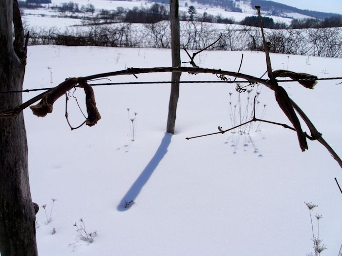 PruningGrapes0201