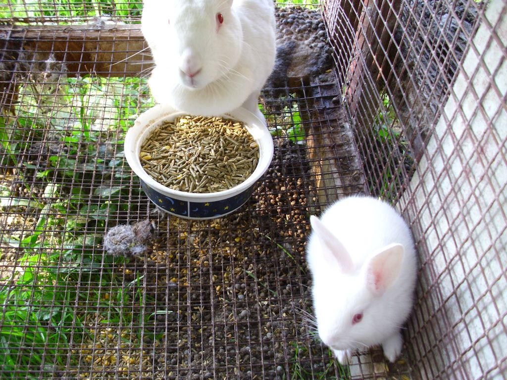 Rabbits – John's Random Thoughts and Discussions