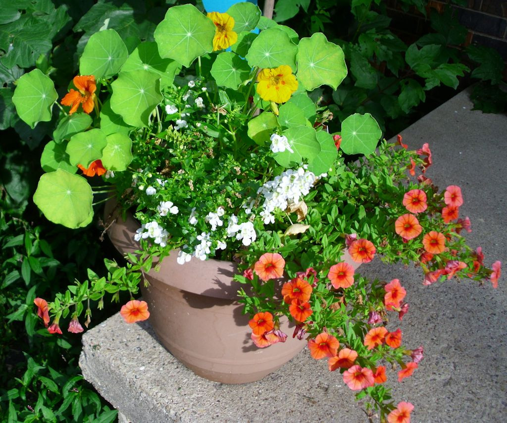 Color variations and textures differentiate the two front porch pots.